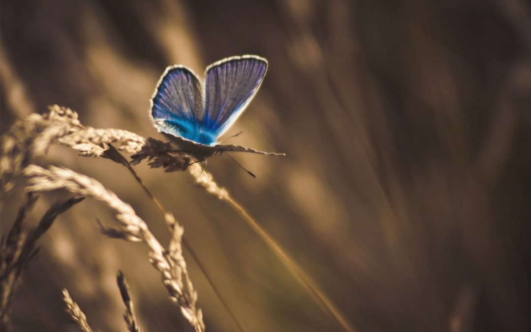 253861-butterfly-nature-wheat-macro-insect-animals